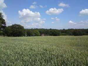 Loxwood midsummer